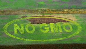 The inscription No GMO is seen