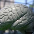 Влияние секса на мозг подростков