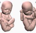 Новые технологии: 3-D модель Вашего будущего ребенка