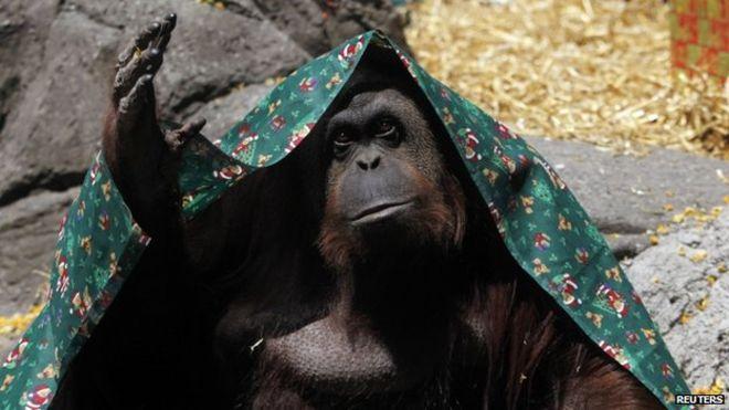 Суд наделил правами орангутанга, а самых беззащитных человеческих существ становится всё больше