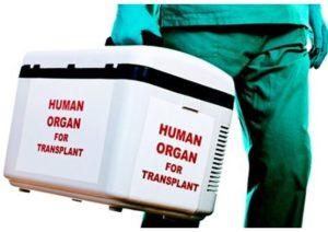 Как Католическая Церковь относится к трансплантации органов?